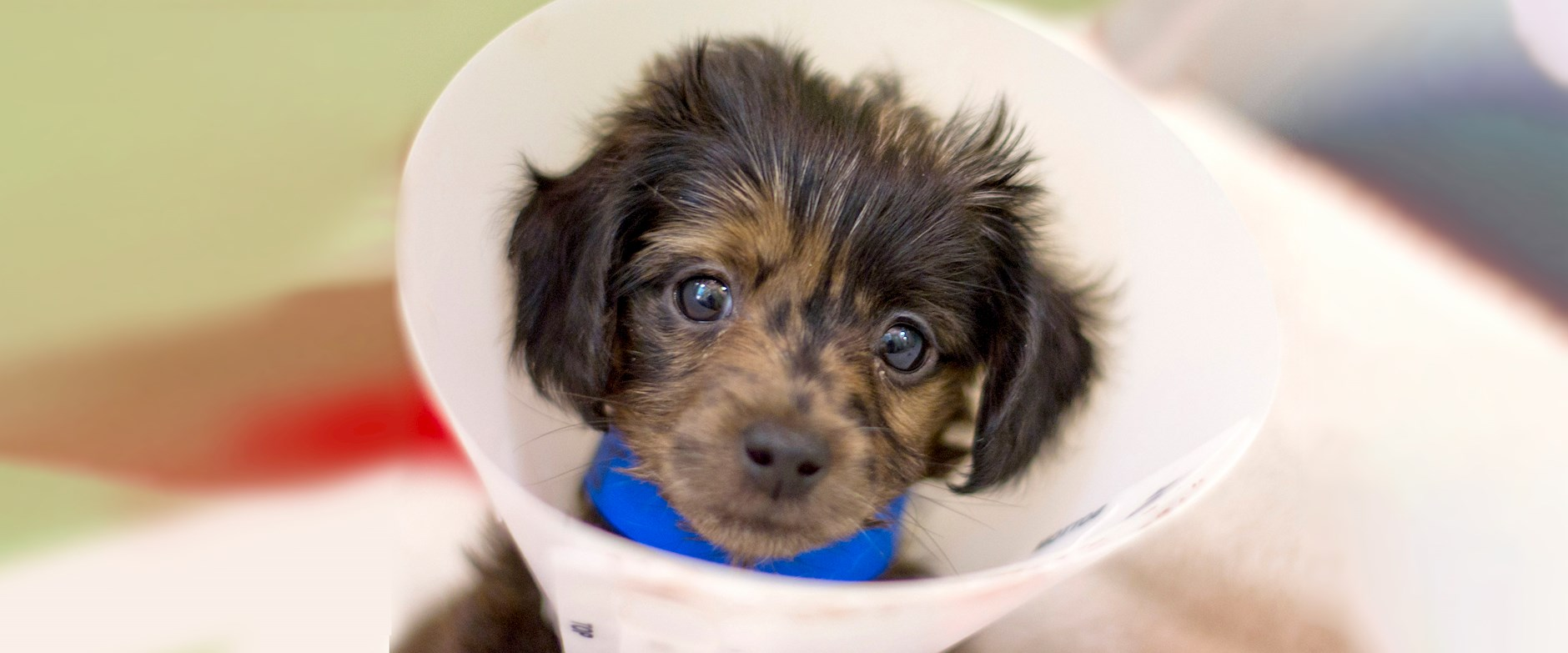 A small puppy with a medical cone around its neck